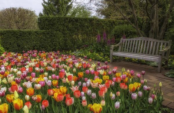 Chicago Botanic Garden Photograph - Tulip Garden by Julie Palencia