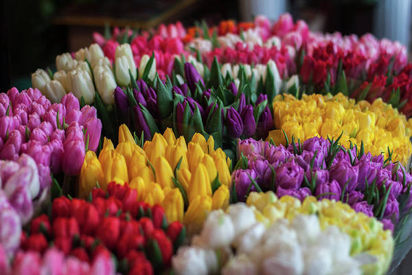 Wall Art - Photograph - Tulip Market by Happy Home Artistry
