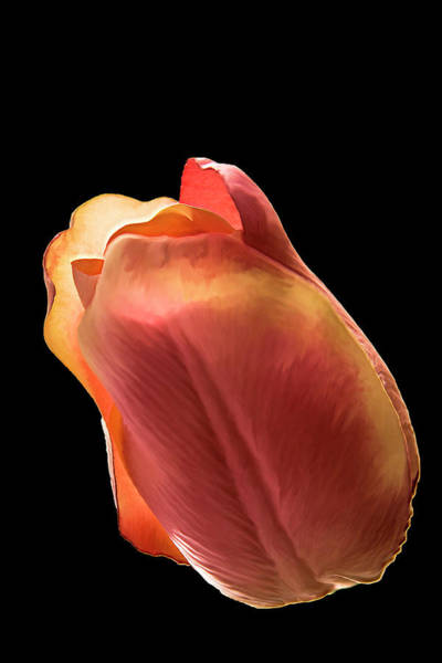 Photograph - Tulip by Mike Stephens