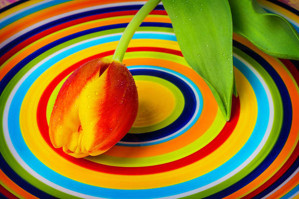 Platter Photograph - Tulip On Circle Plate by Garry Gay