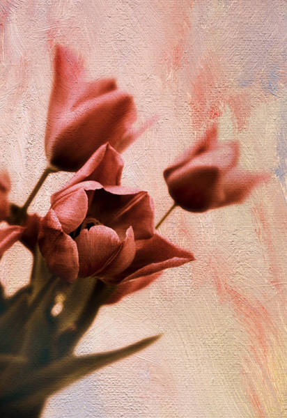 Photograph - Tulip Whimsy by Jessica Jenney