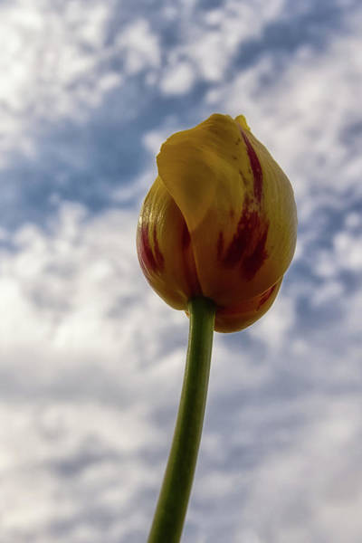 Wall Art - Photograph - Tulip Time 7 by Heather Kenward