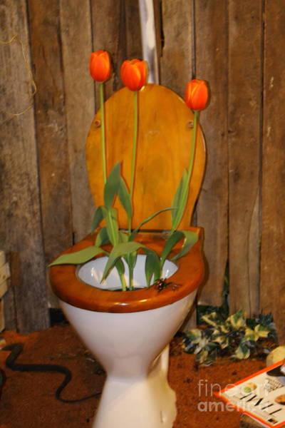 Photograph - Tulip Toiletry by Elaine Teague