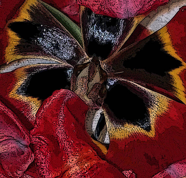 Wall Art - Photograph - Tulip With Edging by Janis Beauchamp