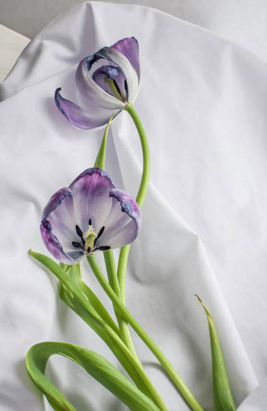 Allegory Photograph - Tulipa And Her Lover Julien by Maggie Terlecki