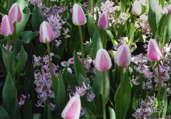 Photograph - Tulips And Hyacinths by Kathie Chicoine