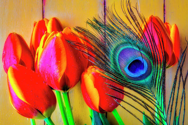 Wall Art - Photograph - Tulips And Peacock Feather by Garry Gay