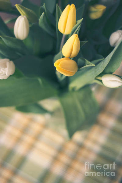 Treen Photograph - Tulips And Plaid by Cheryl Baxter