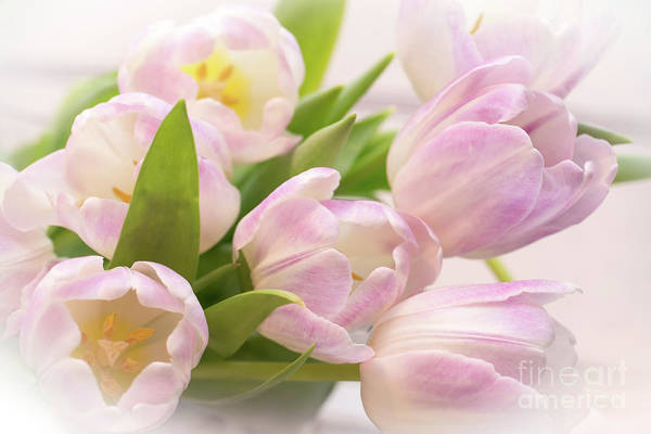 Wall Art - Photograph - Tulips Bouquet by Delphimages Photo Creations
