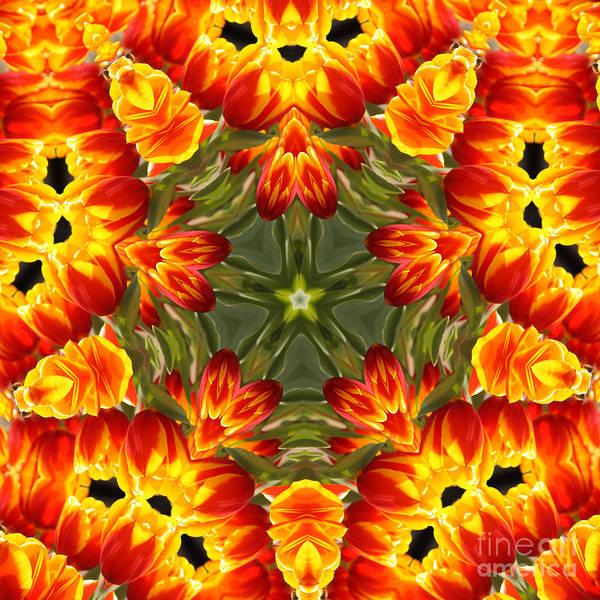 Photograph - Tulips by Elaine Teague
