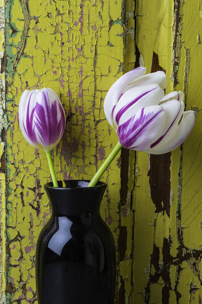 Paint Chips Photograph - Tulips In Black Vase by Garry Gay