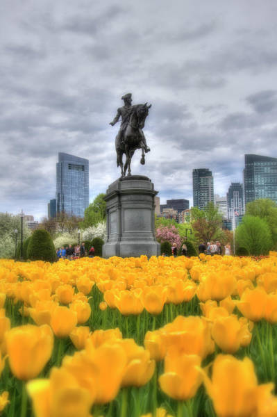 Photograph - Tulips In Boston Public Garden by Joann Vitali