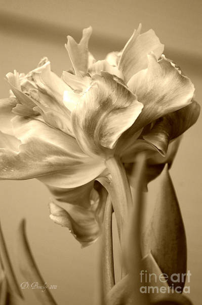 Photograph - Tulips In Sepia by Donna Bentley