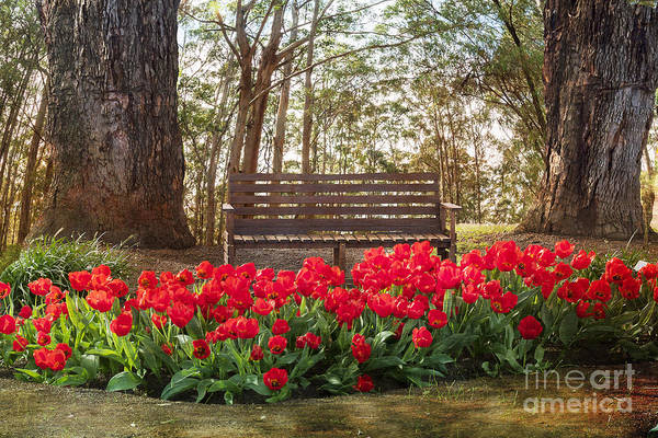 Photograph - Tulips In The Forest Clearing by Elaine Teague