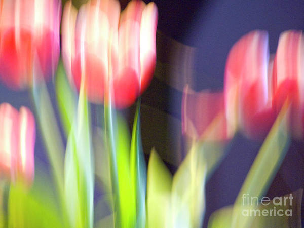 Photograph - Tulips In The Wind by Heiko Koehrer-Wagner