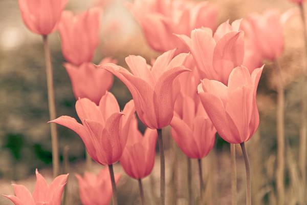 Whimsical Photograph - Tulips by Maria Heyens