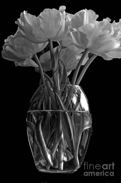Vase Of Flowers Photograph - Tulips by Marion Galt
