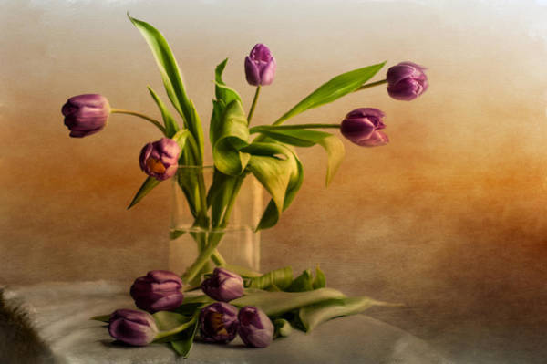 Photograph - Tulips On A Table  by Maggie Terlecki