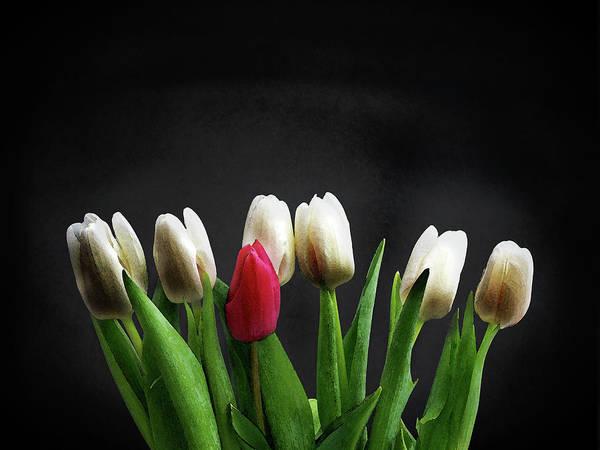 Wall Art - Photograph - Tulips On Black by Mark Rogan