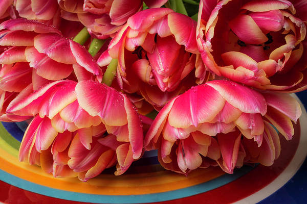 Platter Photograph - Tulips With Dew On Colorful Plate by Garry Gay