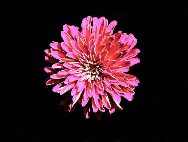 Photograph - Tulsa Flower by Susan Vineyard