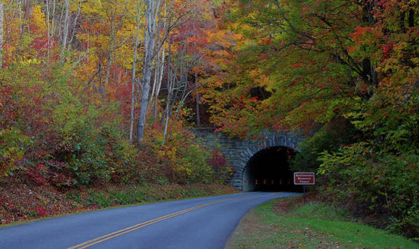 Photograph - Tunnel by Ree Reid