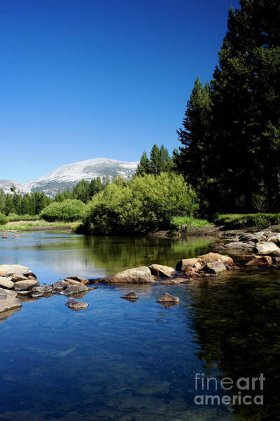 Photograph - Tuolumne Meadows by Charmian Vistaunet