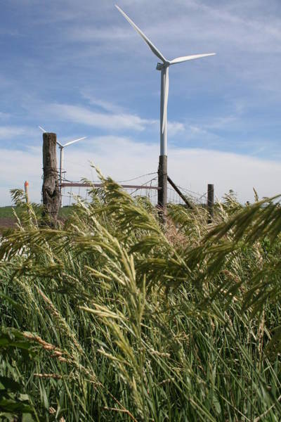 Photograph - Turbine Grass by Dylan Punke