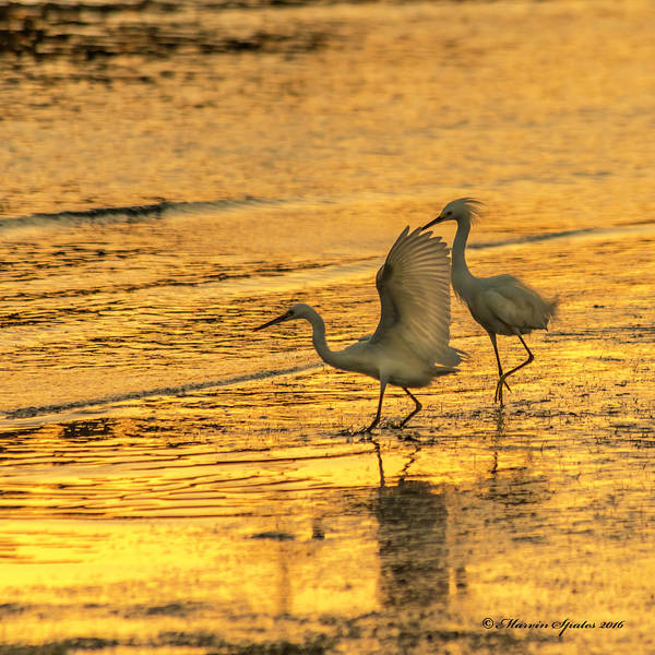 Waterbird Photograph - Turf War by Marvin Spates