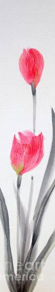 Turips 12050016fy Art Print