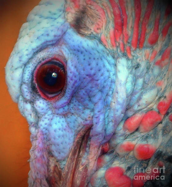 Photograph - Turkey Head Shot by Kim Pate