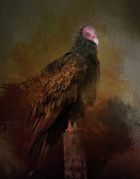 Photograph - Turkey Vulture by Gloria Anderson
