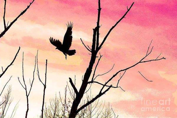 Photograph - Turkey Vulture In Flight At Sunset by Karen Adams