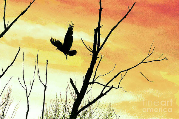 Photograph - Turkey Vulture In Flight In Yellow Sky by Karen Adams