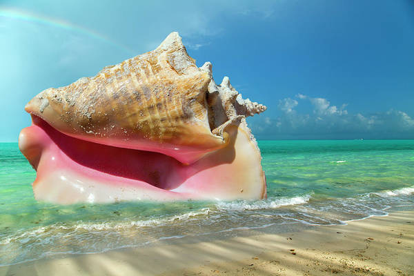 Wall Art - Photograph -  Conchquered by Betsy Knapp