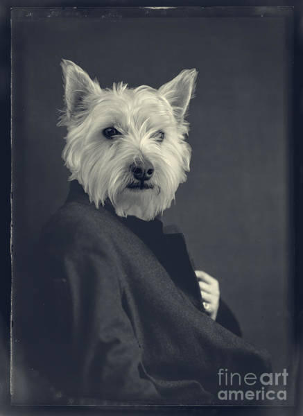 Westie Photograph - Turn Of The Century by Edward Fielding