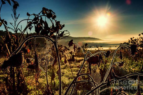 New Preston Ct Photograph - Turner Farm by Grant Dupill
