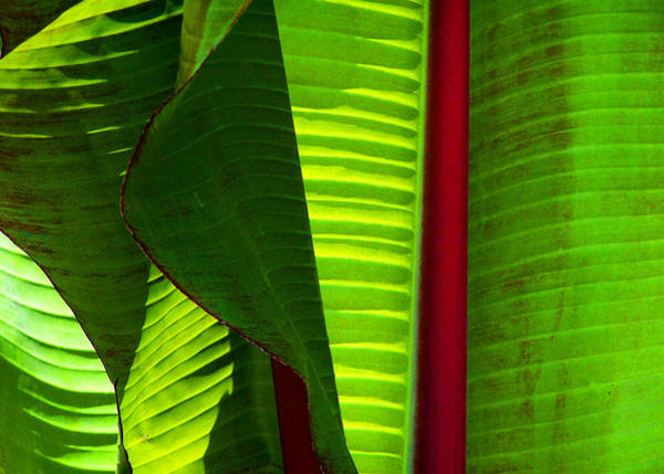 Photograph - Turning A New Leaf by Steven Huszar