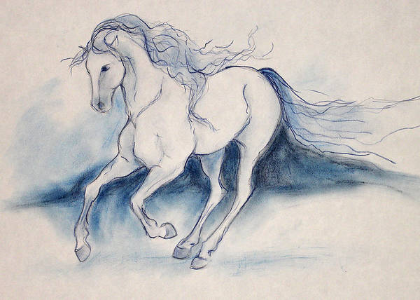 Warmbloods Drawing - Turning Blue by Jennifer Fosgate