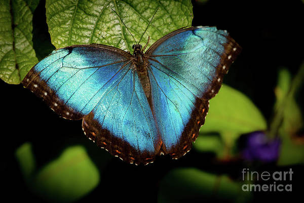 Photograph - Turquoise Beauty by Sabrina L Ryan
