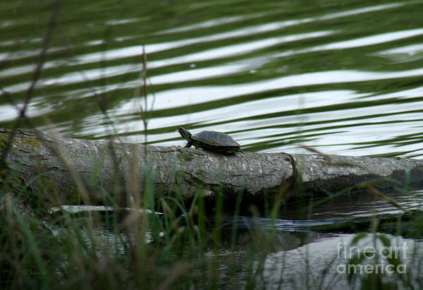 Photograph - Turtle At Cowley State Fishing Lake by E B Schmidt