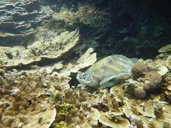 Photograph - Turtle Cove by Michael Scott