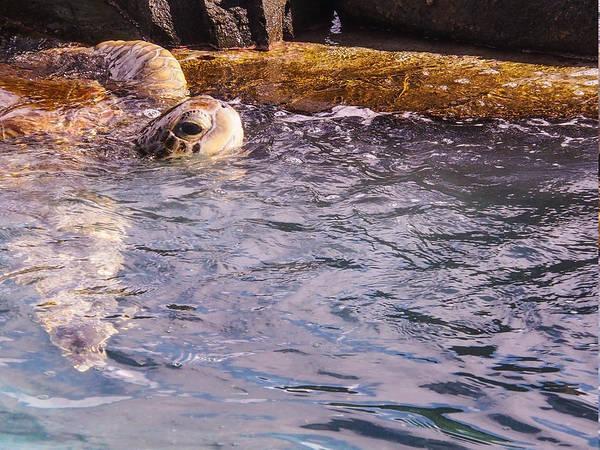 Photograph - Turtle Haven II - St Thomas Us Virgin Islands by Karen Zuk Rosenblatt