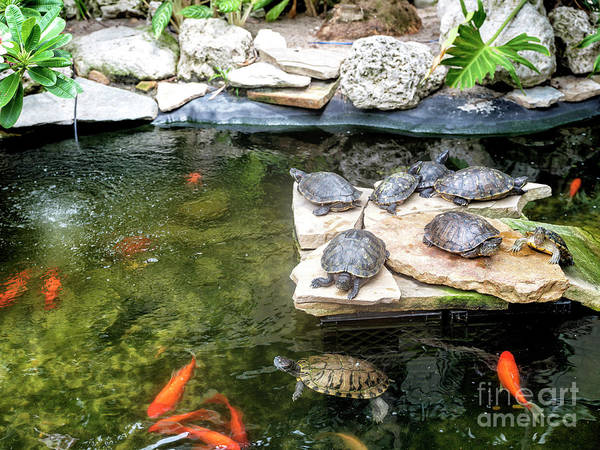 Photograph - Turtle Life In Key West by John Rizzuto