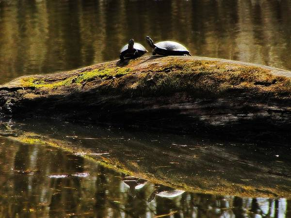 Photograph - Turtle Reflections by Scott Hovind