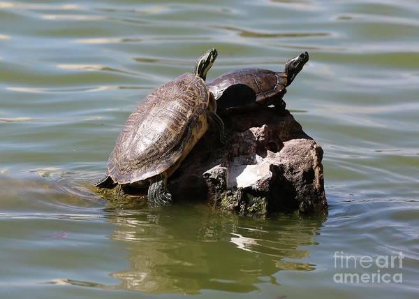 Photograph - Turtle Rock by Carol Groenen
