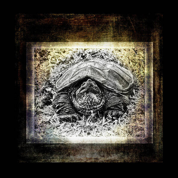 Snapping Wall Art - Photograph - Turtle Tv by Susan Capuano