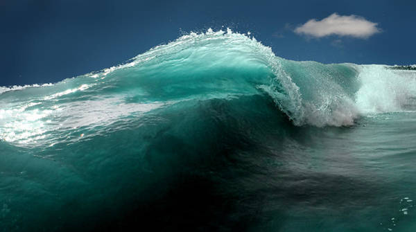Wall Art - Photograph - Turtle Wave by Greg Waters