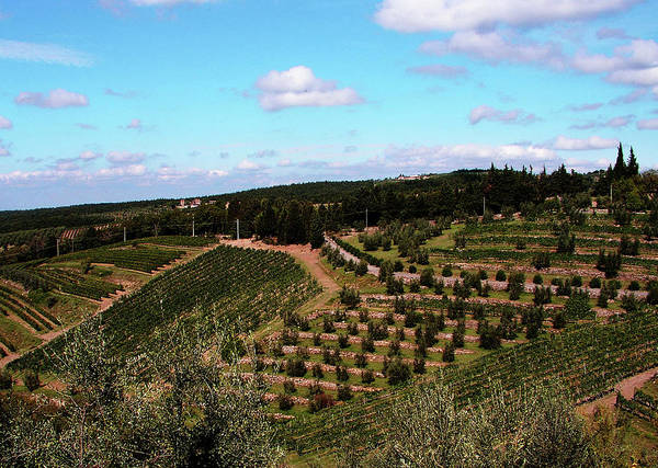 Photograph - Tuscan Hillside by Mary Capriole