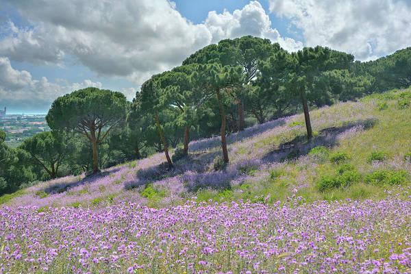 Wall Art - Photograph - Tuscan Impression by Joachim G Pinkawa